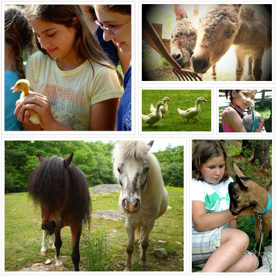 campers with animals